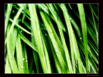 Grass by my front door