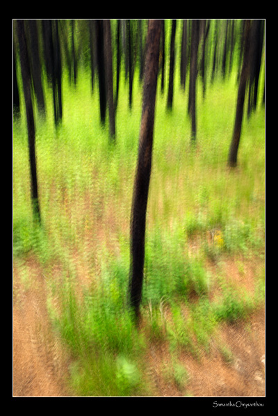 Forest Scene--Straight or Manipulated?